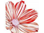 Fototapeta Červenobílá květina na bílém pozadí L-347 | 220x220 cm Fototapety