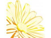 Fototapeta Žlutá kopretina L-352 | 220x220 cm Fototapety