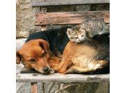 Fototapeta Kočka a pes L-221   220x220 cm Fototapety