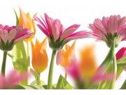 Fototapeta Jarní květiny XL-188 | 330x220 cm Fototapety