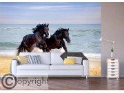 Fototapeta Cválající koně FTNS-1260 Fototapety