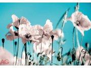 Fototapeta AG Poppies on blue FTNXXL-0118 | 360x270 cm Fototapety