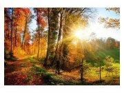Fototapeta na zeď Procházka lesem | MS-5-0065 | 375x250 cm Fototapety