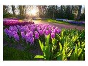Fototapeta na zeď Květy hyacintu | MS-5-0068 | 375x250 cm Fototapety