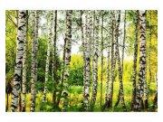 Fototapeta na zeď Březový les | MS-5-0094 | 375x250 cm Fototapety