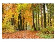 Fototapeta na zeď Podzimní les | MS-5-0099 | 375x250 cm Fototapety