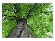 Fototapeta na zeď Koruna stromu | MS-5-0101 | 375x250 cm Fototapety