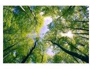 Fototapeta na zeď Stromy v oblacích | MS-5-0104 | 375x250 cm Fototapety