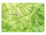 Fototapeta na zeď Žilky listů | MS-5-0111 | 375x250 cm Fototapety