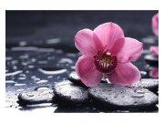 Fototapeta na zeď Orchidej | MS-5-0120 | 375x250 cm Fototapety