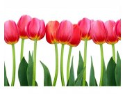 Fototapeta na zeď Tulipány | MS-5-0126 | 375x250 cm Fototapety