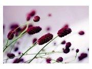 Fototapeta na zeď Fialová květina | MS-5-0141 | 375x250 cm Fototapety