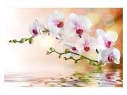 Fototapeta na zeď Bílá orchidej | MS-5-0147 | 375x250 cm Fototapety
