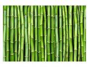 Fototapeta na zeď Bambus | MS-5-0165 | 375x250 cm Fototapety