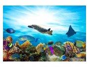 Fototapeta na zeď Ryby v oceánu   MS-5-0216   375x250 cm Fototapety