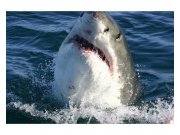 Fototapeta na zeď Žralok | MS-5-0217 | 375x250 cm Fototapety