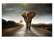 Fototapeta na zeď Kráčející slon | MS-5-0225 | 375x250 cm Fototapety