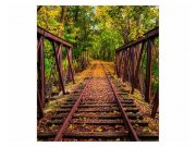 Fototapeta na zeď Železnice v lese | MS-3-0055 | 225x250 cm Fototapety