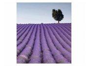 Fototapeta na zeď Levandulová pole | MS-3-0088 | 225x250 cm Fototapety