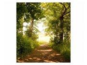 Fototapeta na zeď Lesní cesta | MS-3-0093 | 225x250 cm Fototapety
