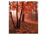 Fototapeta na zeď Les v mlze | MS-3-0095 | 225x250 cm Fototapety