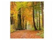 Fototapeta na zeď Podzimní les | MS-3-0099 | 225x250 cm Fototapety
