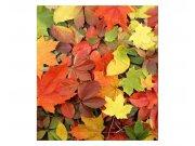 Fototapeta na zeď Pestrobarevné listí | MS-3-0115 | 225x250 cm Fototapety