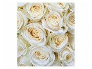 Fototapeta na zeď Bílé růže | MS-3-0137 | 225x250 cm Fototapety