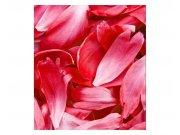 Fototapeta na zeď Červené okvětní lístky | MS-3-0151 | 225x250 cm Fototapety