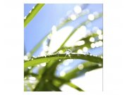 Fototapeta na zeď Tráva s rosou | MS-3-0154 | 225x250 cm Fototapety