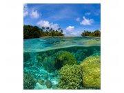 Fototapeta na zeď Korálový útes | MS-3-0200 | 225x250 cm Fototapety