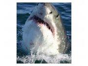 Fototapeta na zeď Žralok | MS-3-0217 | 225x250 cm Fototapety