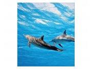 Fototapeta na zeď Delfíni | MS-3-0218 | 225x250 cm Fototapety
