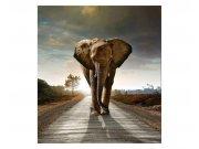 Fototapeta na zeď Kráčející slon | MS-3-0225 | 225x250 cm Fototapety