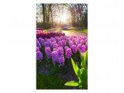Fototapeta na zeď Květiny hyacintu | MS-2-0068 | 150x250 cm Fototapety