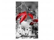Fototapeta na zeď červené listí na černém pozadí | MS-2-0110 | 150x250 cm Fototapety