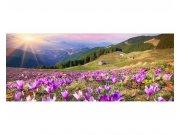Panoramatická Fototapeta na zeď Krokusy na jaře | MP-2-0064 | 375x150 cm Fototapety