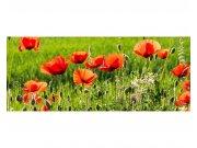 Panoramatická Fototapeta na zeď Maková pole | MP-2-0092 | 375x150 cm Fototapety