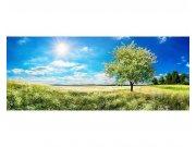 Panoramatická Fototapeta na zeď Strom na louce | MP-2-0096 | 375x150 cm Fototapety