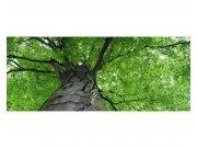 Panoramatická Fototapeta na zeď Koruna stromu | MP-2-0101 | 375x150 cm Fototapety