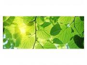 Panoramatická Fototapeta na zeď Zelené listy | MP-2-0107 | 375x150 cm Fototapety