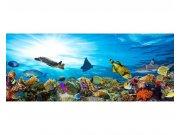 Panoramatická Fototapeta na zeď Ryby v oceánu | MP-2-0216 | 375x150 cm Fototapety
