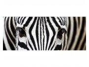 Panoramatická Fototapeta na zeď Zebra | MP-2-0234 | 375x150 cm Fototapety