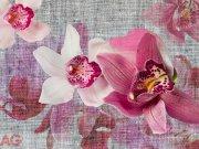 Fototapeta AG Orchids FTNXXL-1148 | 360x270 cm Fototapety