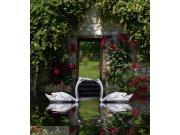 Fototapeta AG Swans FTNXL-2536 | 180x202 cm Fototapety
