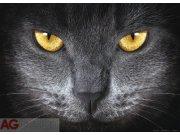 Fototapeta AG Eyes FTM-0500 | 160x115 cm Fototapety