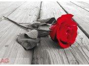 Fototapeta AG Red rose FTNM-2619 | 160x110 cm Fototapety skladem
