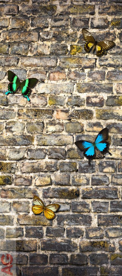 Fototapeta AG Butterfly on the Wall FTV-1519 | 90x202 cm - Fototapety
