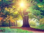 Fototapeta AG Listnatý strom FTNXXL-2424 | 360x270 cm Fototapety