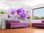 Fototapeta AG Orchid 3d FTNXXL-2400 | 360x270 cm Fototapety